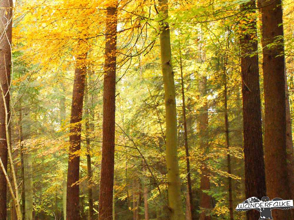 Waldlichtung Sonnenschein Waldliebe Wanderfalke
