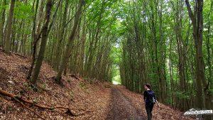 Buchenwald Wildnis Trail Nationalpark Eifel Etappe 3