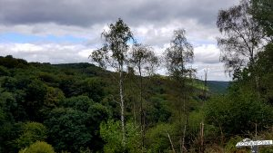Wilde Natur und Waldlandschaft im Nationalpark Eifel