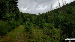 Wildnis-Trail-Wald-Nationalpark-Eifel-Wanderpfad
