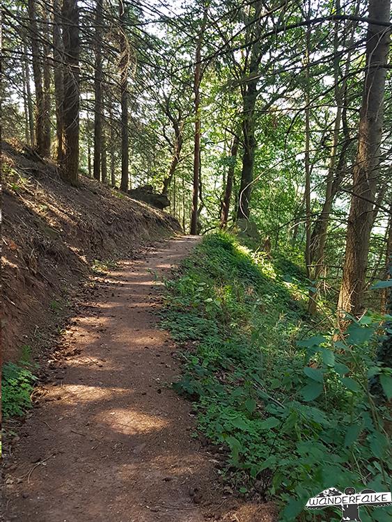 Waldpfade auf der Buntsandsteinroute Nordeifel
