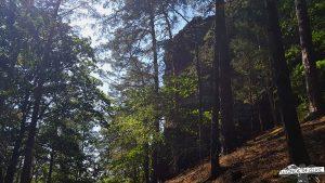 Buntsandsteinroute Nordeifel Wanderweg Abenden Blens Nationalpark Eifel Wandern
