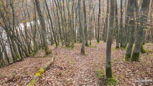 Abstieg Buntsandsteinroute Wanderweg Nationalpark Eifel Rursee