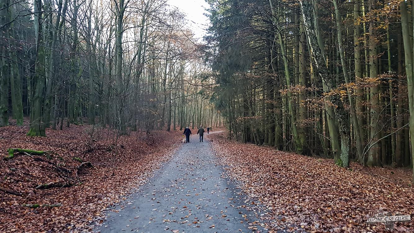 Nationalpark Eifel Wilder Kermeter Buchenwald Buntsandsteinroute Wanderweg