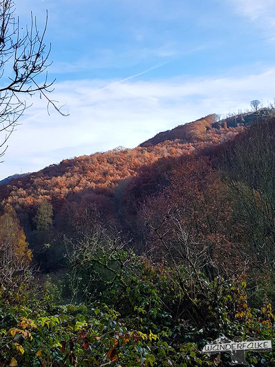 Talblick Buchenwälder im Nationpark Eifel in Herbstfarben