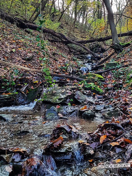 Wasserfall Nationalpark Eifel Buntsandsteinroute Nordeifel wandern