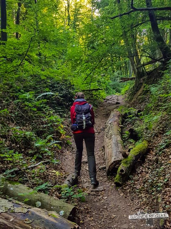 Aufstieg Felsenweg Teufelsschlucht Ernzen Echternach NaturWanderPark delux Wanderfalkeonline wandern