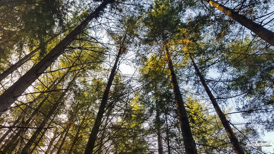 Baumdach Felsenweg 6 NaturWanderpark delux Teufelsschlucht Ernzen Echternach