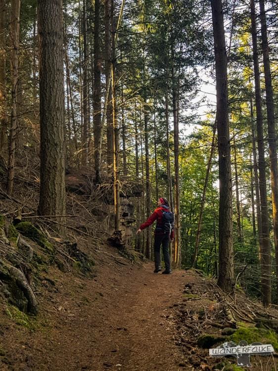 Unter Tannen Felsenweg Teufelsschlucht Ernzen Echternach NaturWanderPark delux Wanderfalkeonline wandern