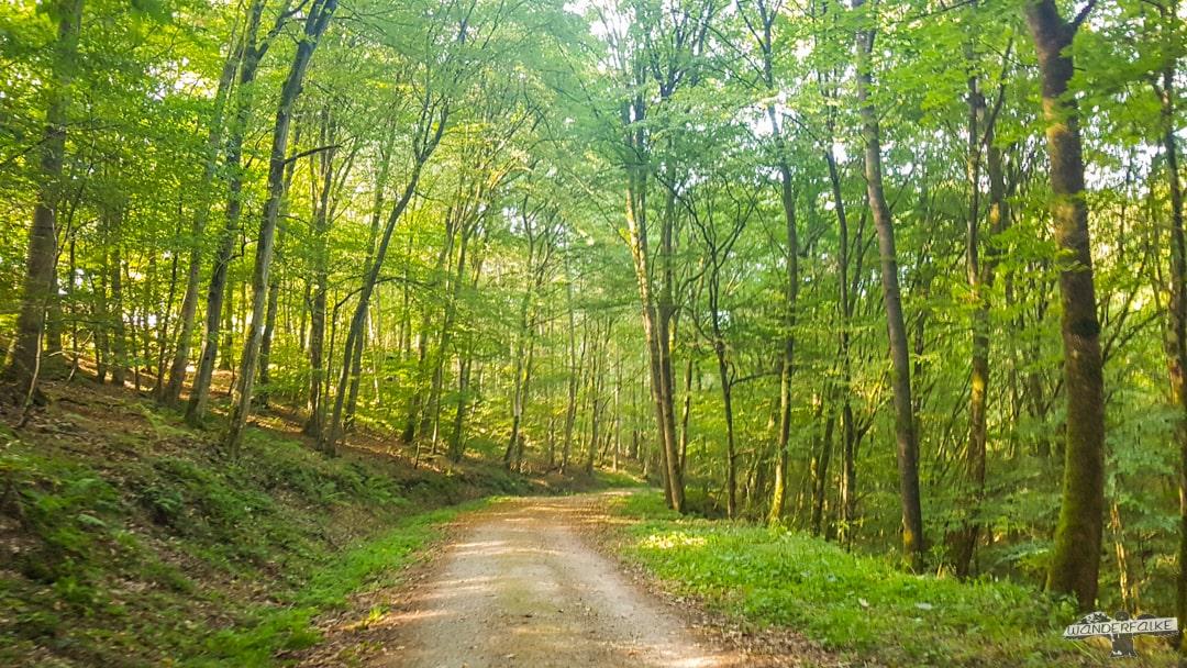 Waldlichtung Felsenweg 6 NaturWanderpark delux Teufelsschlucht Ernzen Echternach