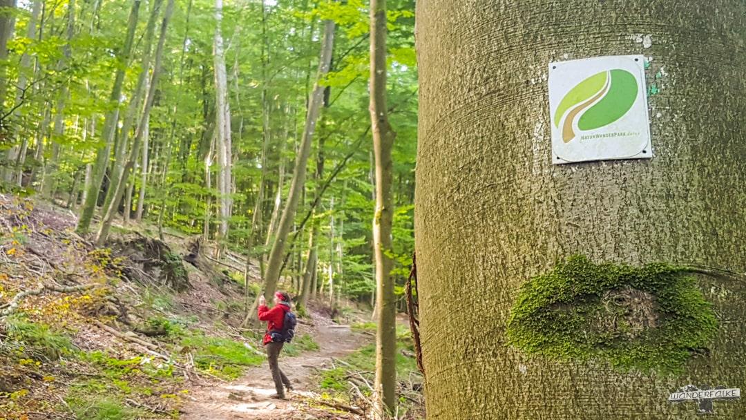 Wandern auf dem Felsenweg 6 NaturWanderpark delux Teufelsschlucht Ernzen Echternach