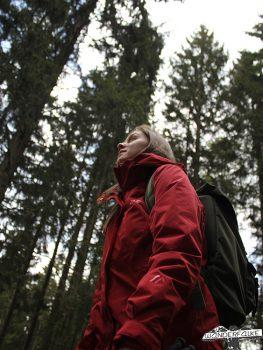 Wandern Wanderfalkeonline Maiersports Härtetest Wald Waldbaden